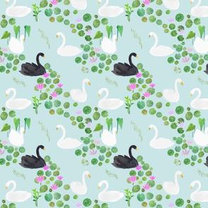 Black Swan in the Garden Pond
