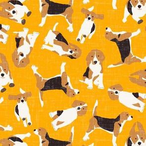 beagle scatter saffron