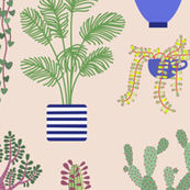 Houseplants, Cacti and Succulents