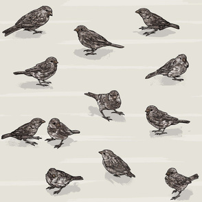 Small Cute Sparrows