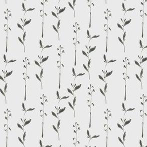 Herb / Herbarium