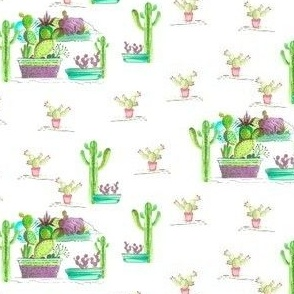 Cactus Play