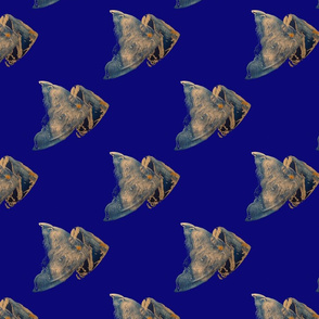 Angel fish on royal blue background
