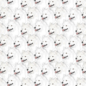 American Eskimo Dog portrait pack