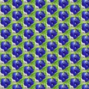 BluePea