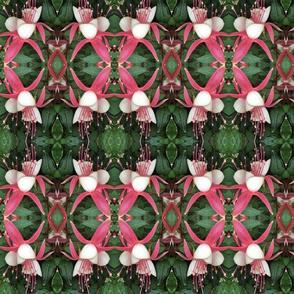 Fuchsias1
