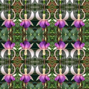 Fuchsias2