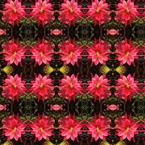 OrchidCactus