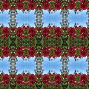 PincushionProtea