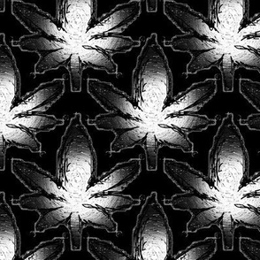 Cannabis Leaves Sketched on Black