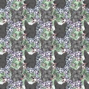Floral black Mudi portraits