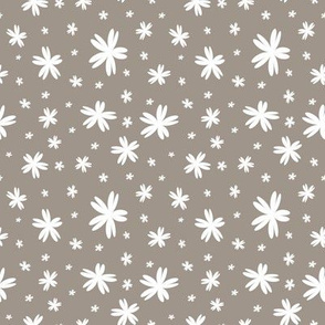 Starfish_tan_white_stock