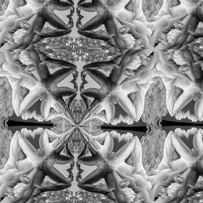 image3A3912_mirror