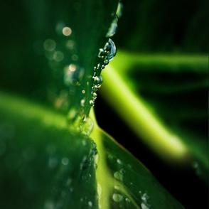 raindrops_MG_6591-ed