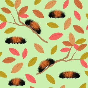 Fall Woolly Worms