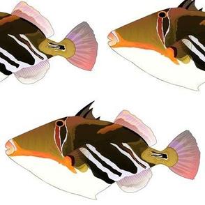 White Banded Lagoon Triggerfish