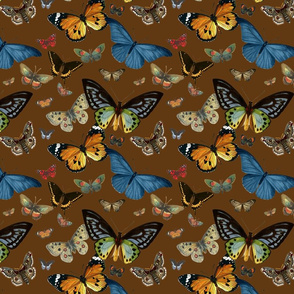 BUTTERFLIES (COCOA)