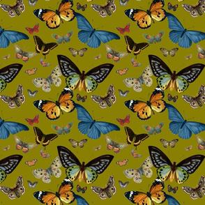 BUTTERFLIES (OLIVE)
