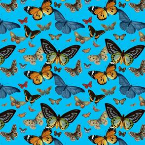 BUTTERFLIES (SKY)
