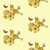Sunny Daffodils