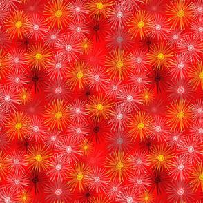 Bright Star Flowers