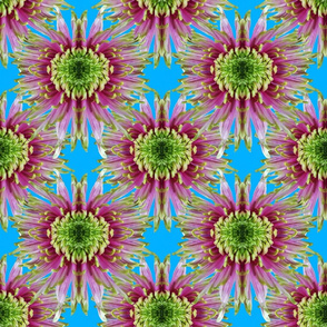 Kaleidoscope Artichoke Flowers on Sky Blue