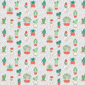 Cactus in terra cotta planters