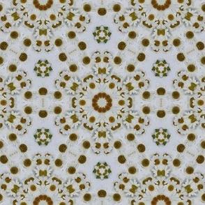 Kaleidoscopic Chamomile