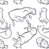 drawn pit bulls