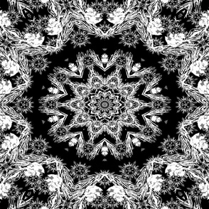 Kaleidoscope with Black Background