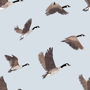 Flock of Canada Geese Birds