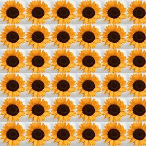 Sunflower Photograph Tile