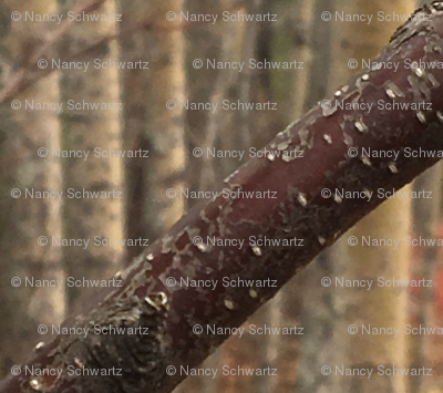 Rrimg_3281_preview