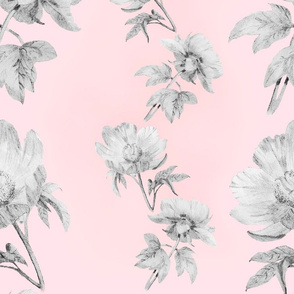 Peony B&W Sketch on Pink Ground by MJ LaCroix