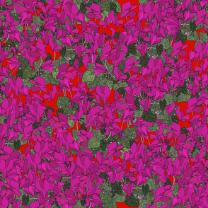 Cyclamen on red