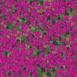 Cyclamen on moss