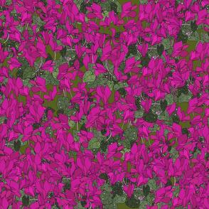 Cyclamen on dark moss
