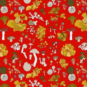 Fungi on red