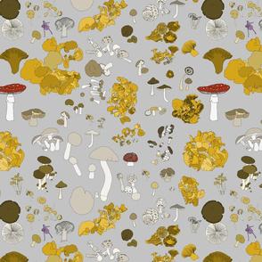 Fungi on grey