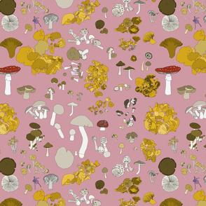Fungi on dusky pink