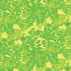 Moringa in Yellow