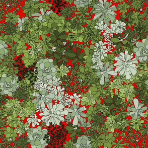 Succulents on red