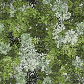Succulents on plaid