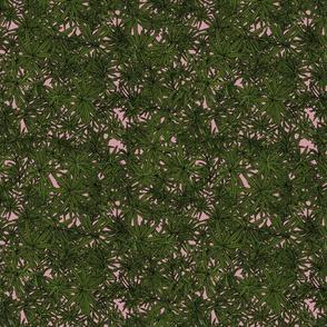 Rosemary on dusky pink