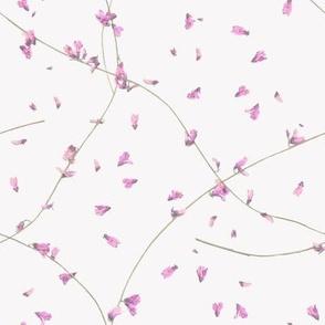 Flower / Lavender