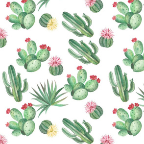 Seamless pattern with Desert and house plant cactuses. Watercolor illustration