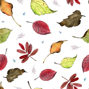 Fall Leaves (on white)