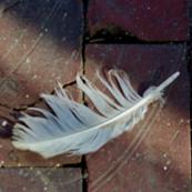 Feather&Brick
