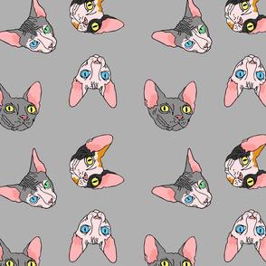 grey sphynx ditsy