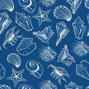 White Seashells Contour Sketches on Dark Blue
